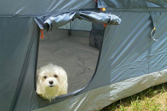 Dog door Canopy Tent NTK